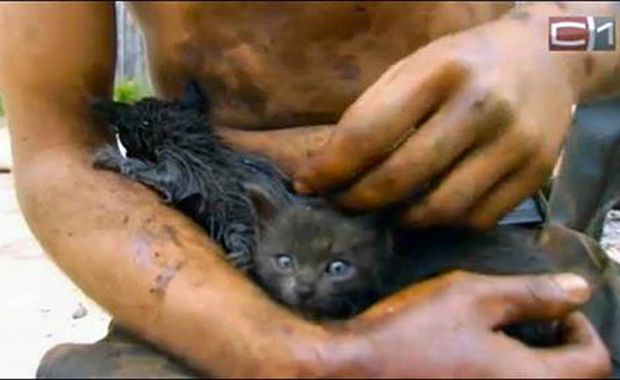 kittens rescued from oil spill