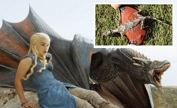 Tiny 'Dragons' Discovered In Indonesia And 'Game of Thrones' Fans