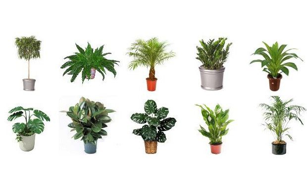 Best Air Filtering Plants To Help Filter Out Harmful Toxins In Your Home Daily Dish