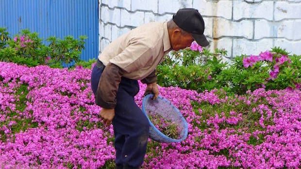 husband plants flowers for blind wife