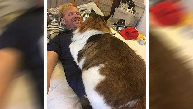 4 Foot Long Maine Coon Is The Largest Cat In New York City