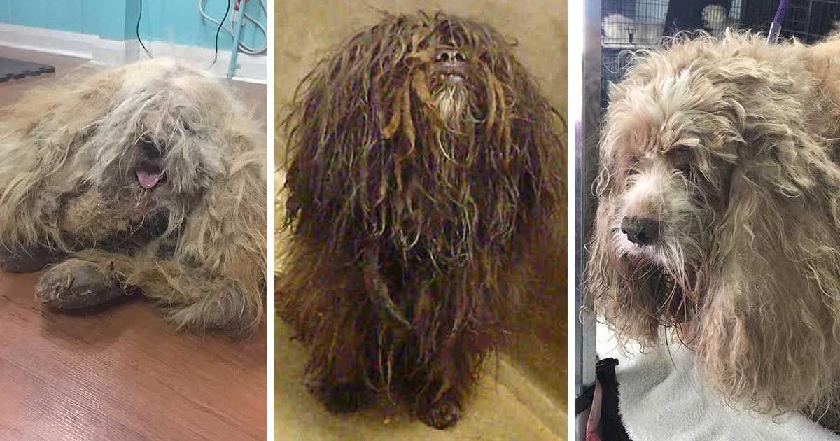 Shelters Hosting Dirty Dogs Makeover Contest Sheds Light On Adoption